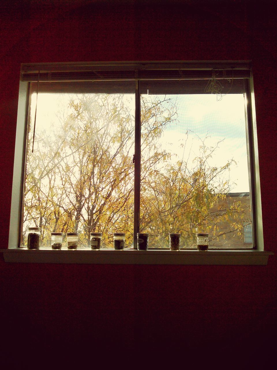 window, tree, indoors, no people, day, nature, architecture