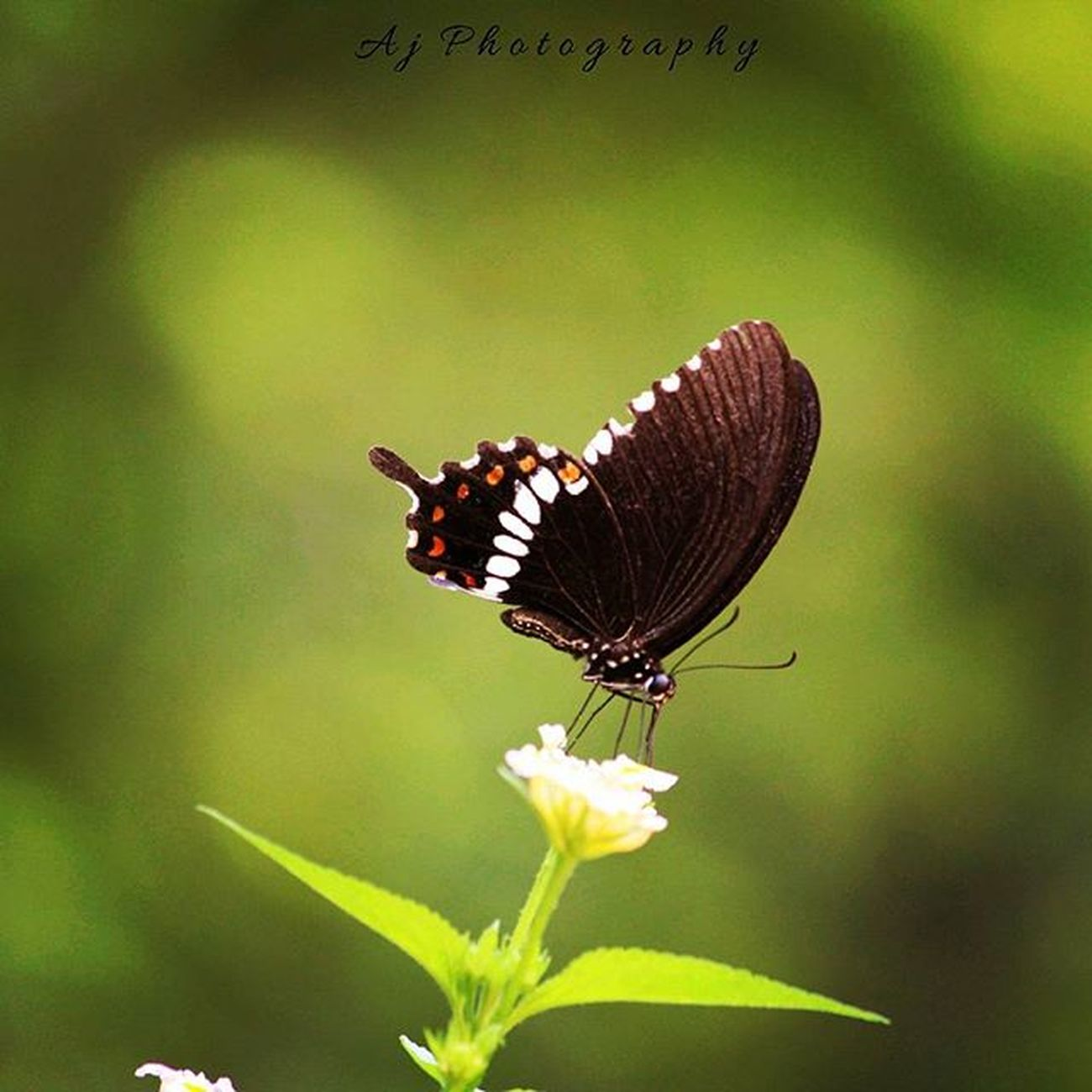 Everyone is like a butterfly, they start out ugly and awkward and then morph into beautiful graceful butterflies that everyone loves. Nature Naturelovers Natureaddict Butterfly Green Natureporn Naturephotography Natgeo Canonforever Photographyislife Passion Canon Canonuser Instapic Instaedit Instalove Instalike Instagood Instadaily L4l Like4like Likeforlike Follow4follow Photooftheday Love loveit peace tagsforlikes tbt tbh