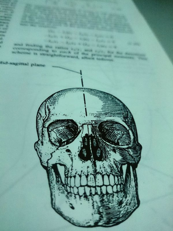 The skull is nature's sculpture.. Hi!Hello World Check This Out Taking Photos Currently Reading Bioengineering Depth Of Field xperiaz1compact Sony Xperia Photography.