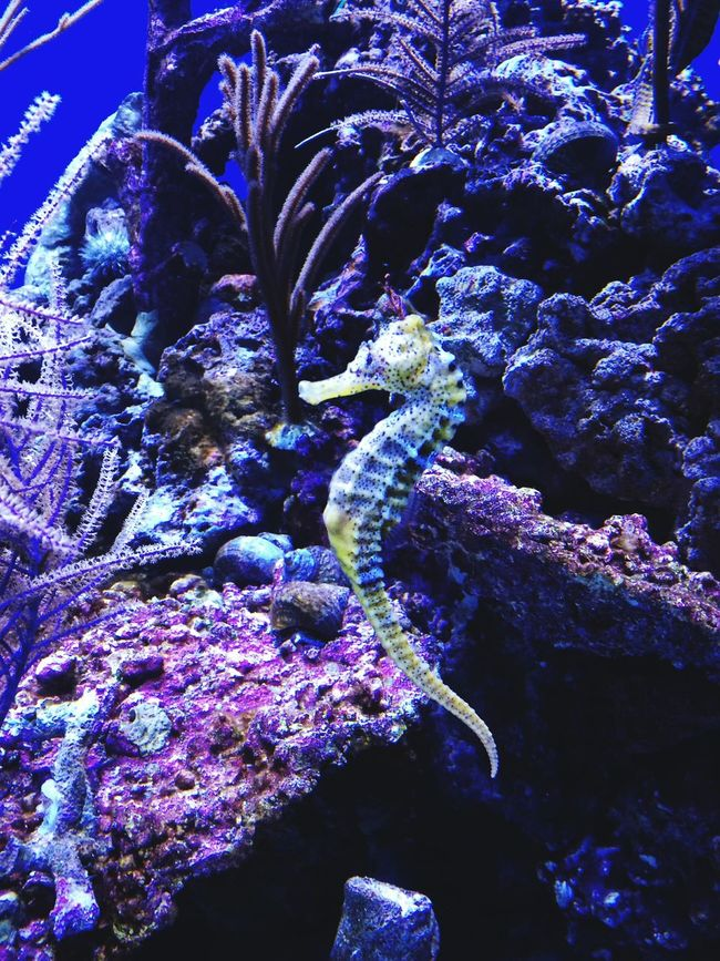 Underwater World Taking Photos Hello World Enjoying Life Oceanlife Ocean Shootermag Aquarium Underwater Sea Life Beauty In Nature Exceptional Photographs Colour Of Life EyeEm Nature Lover From My Point Of View Natural Pattern Color Palette Glowing Tranquility Backgrounds Pivotal Ideas Seahorse