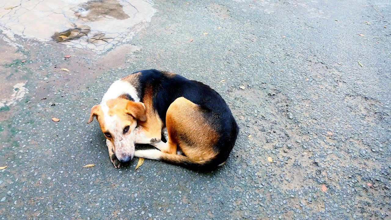animal themes, one animal, mammal, dog, high angle view, domestic animals, pets, no people, day, water, outdoors