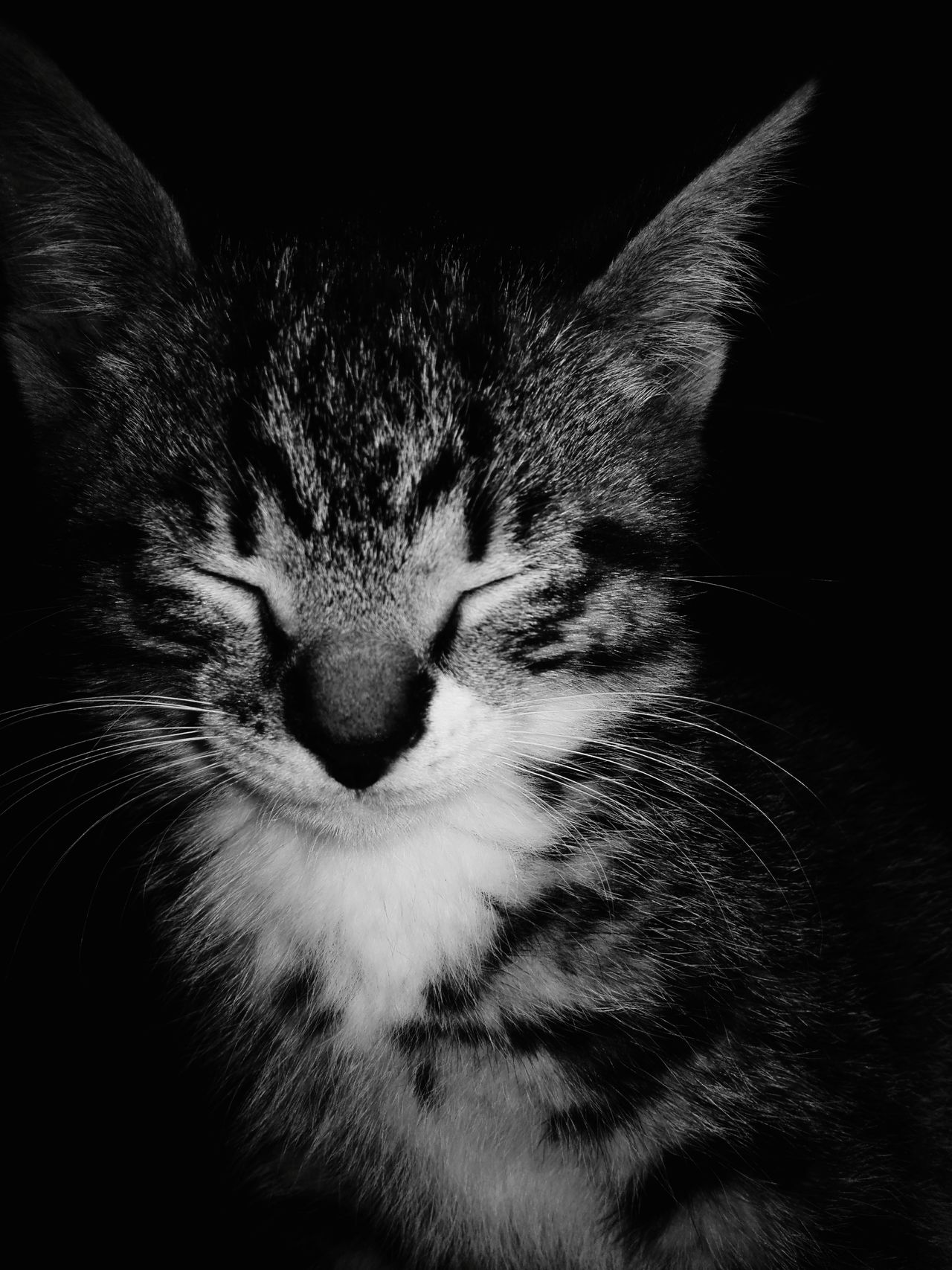 Kitten Black And White Black Cats Myfriends Majestic Animal Cat-ching Background Catsoftheworld Catsofeyeem Katzenleben Kitten 🐱 Kittens Kittens Of Eyeem Katzen Cats 🐱 Cats Of EyeEm Gatos Cat Animals Black And White Black Feline Black And White Photography