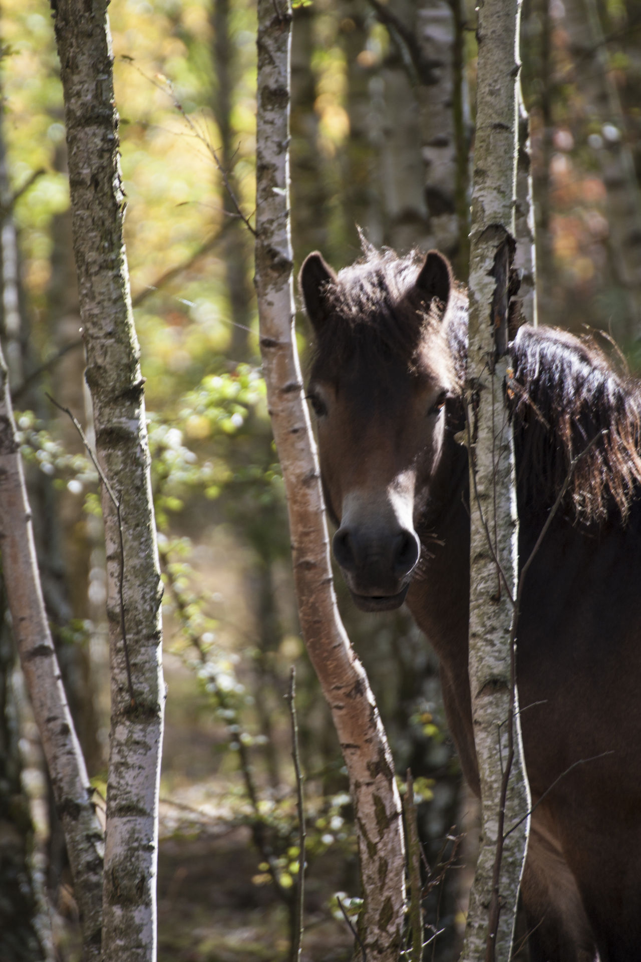 Animal Themes Animals In The Wild Forest Horse Horse In Woodland Mammal Nature One Animal Sunlight Tree Woodlands