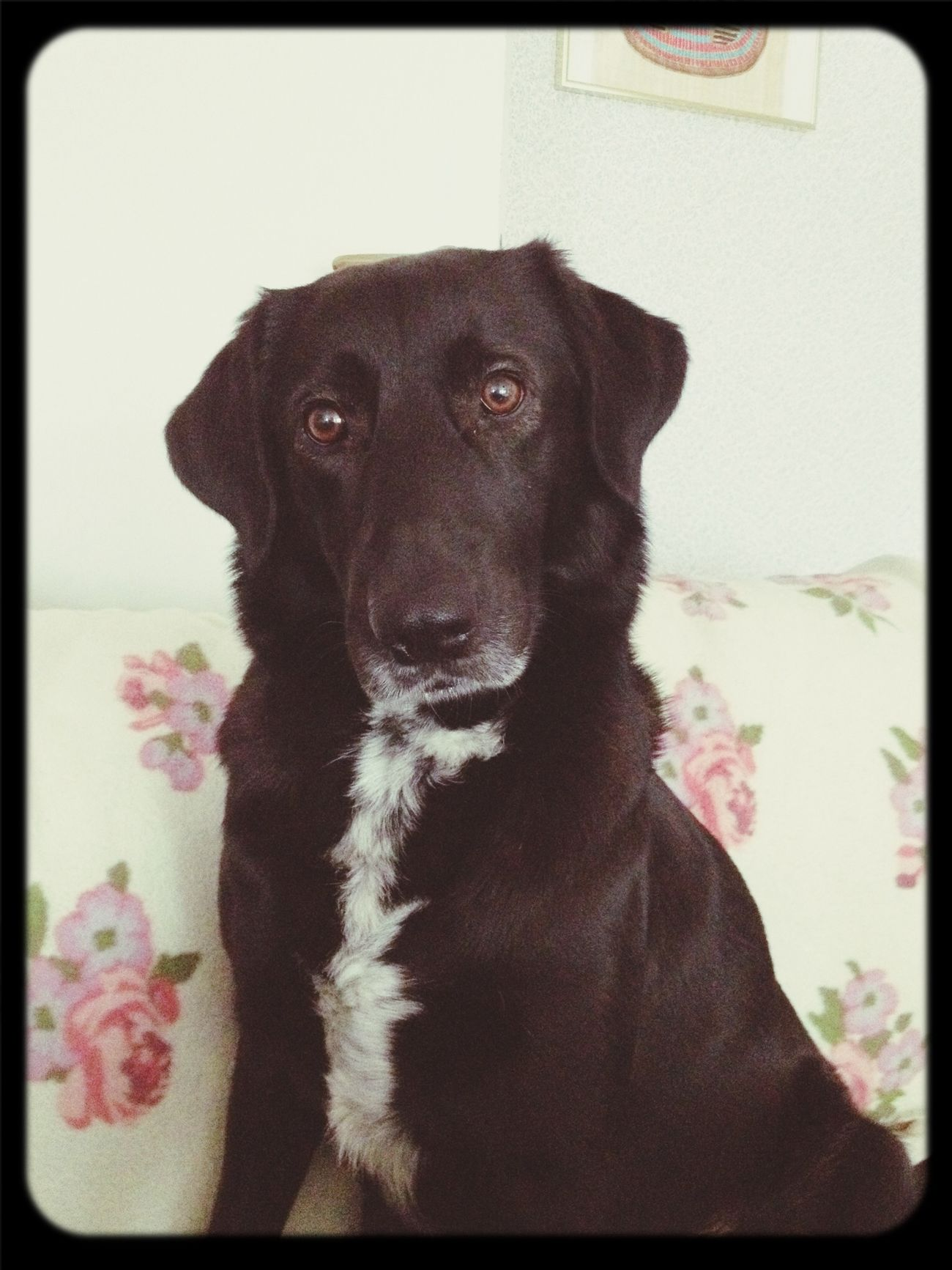 ❤️❤️ Love Dog