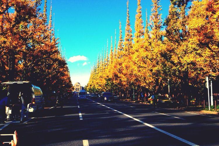 Ginkgo Yellow Autumn Autumn Leaves Sky Blue Tokyo Japan