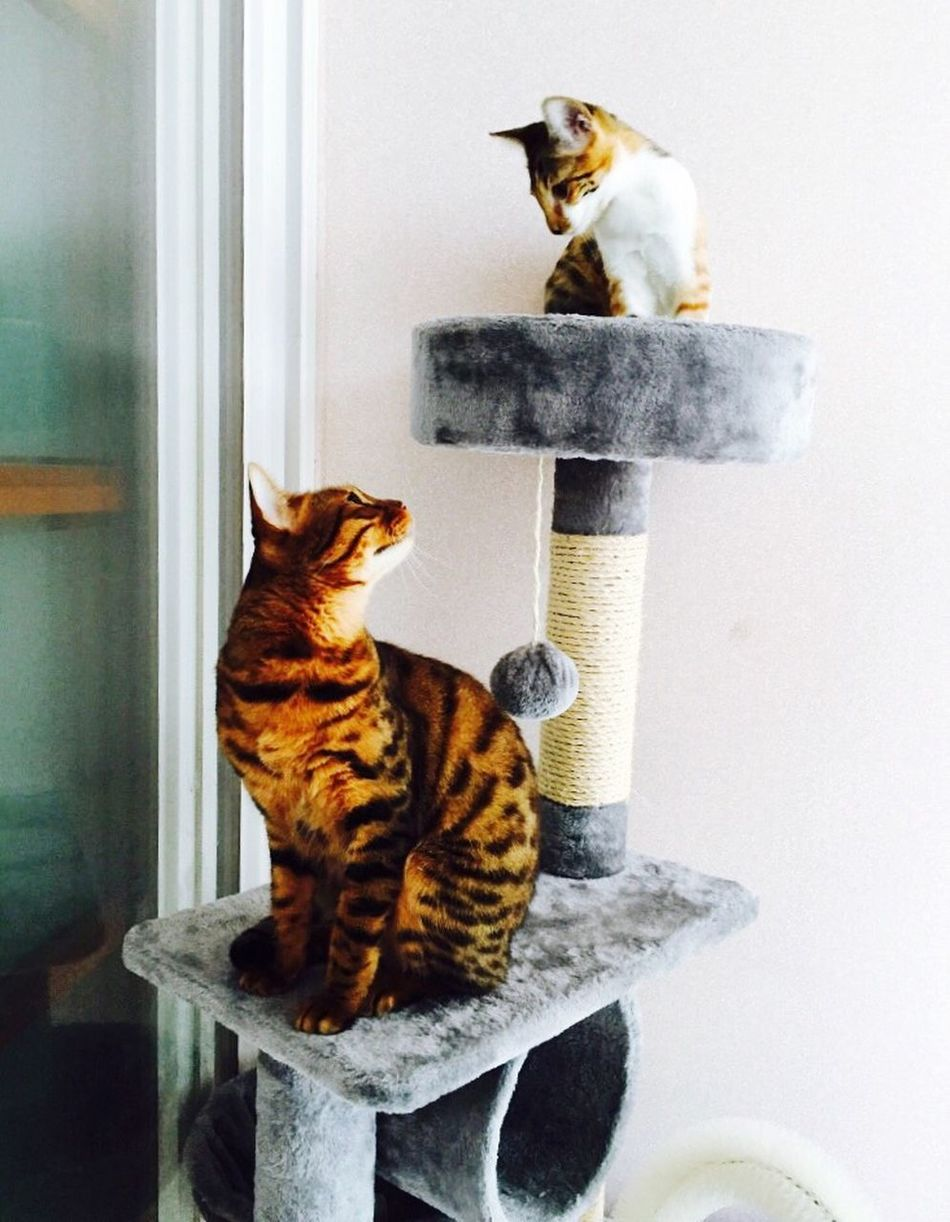 My Cats Under Cat Is Mother Upstairs Is Her Baby But They Are Always Fight 집사는 정신이없다