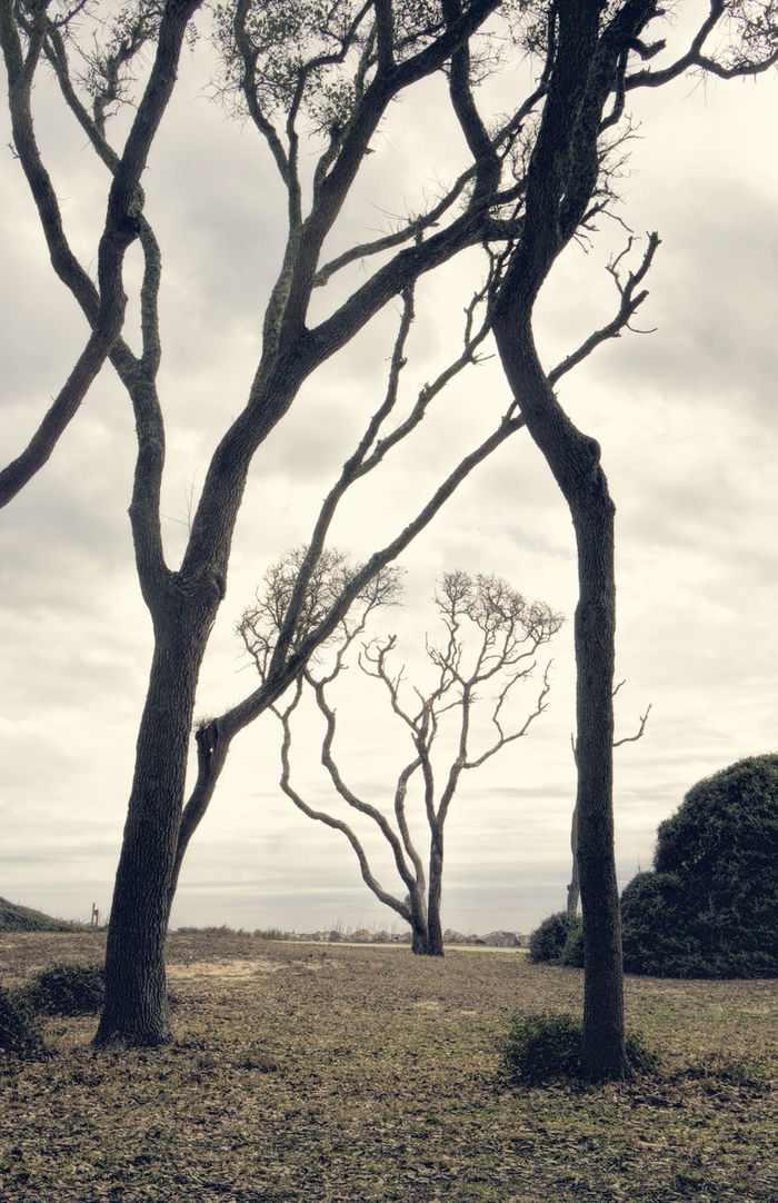 Trees on the Beach Bare Tree Beauty In Nature Fort Fisher Nc Landscape Scenics Single Tree Sky Sony A6000 Sonyphotogallery Sonyphotography Tranquility Trees