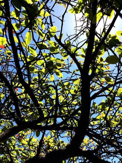 Tamiz Light Tree Sky Green Nature Beauty In Nature