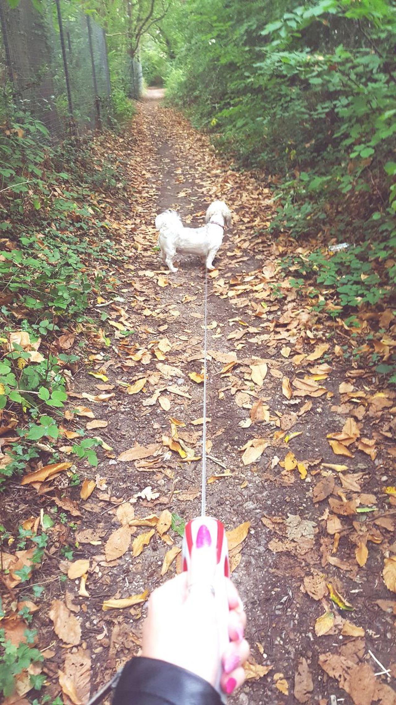 Walking Footpath Withmybestfriend Simba Winteriscoming Saturday Surrey Countryside Dogs Of EyeEm