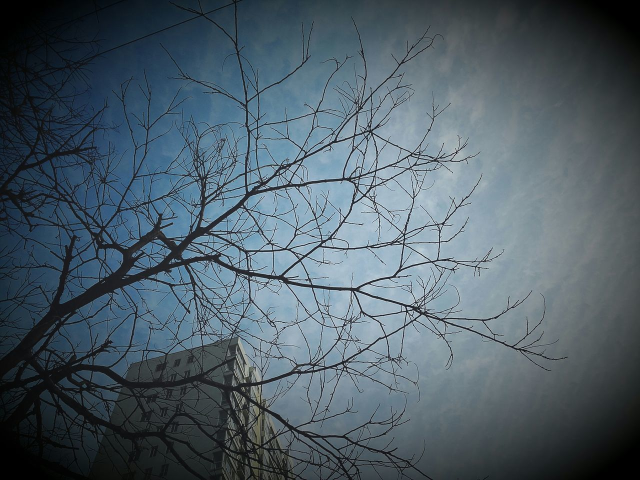 bare tree, tree, nature, sky, branch, vignette, no people, low angle view, tranquility, beauty in nature, outdoors, night