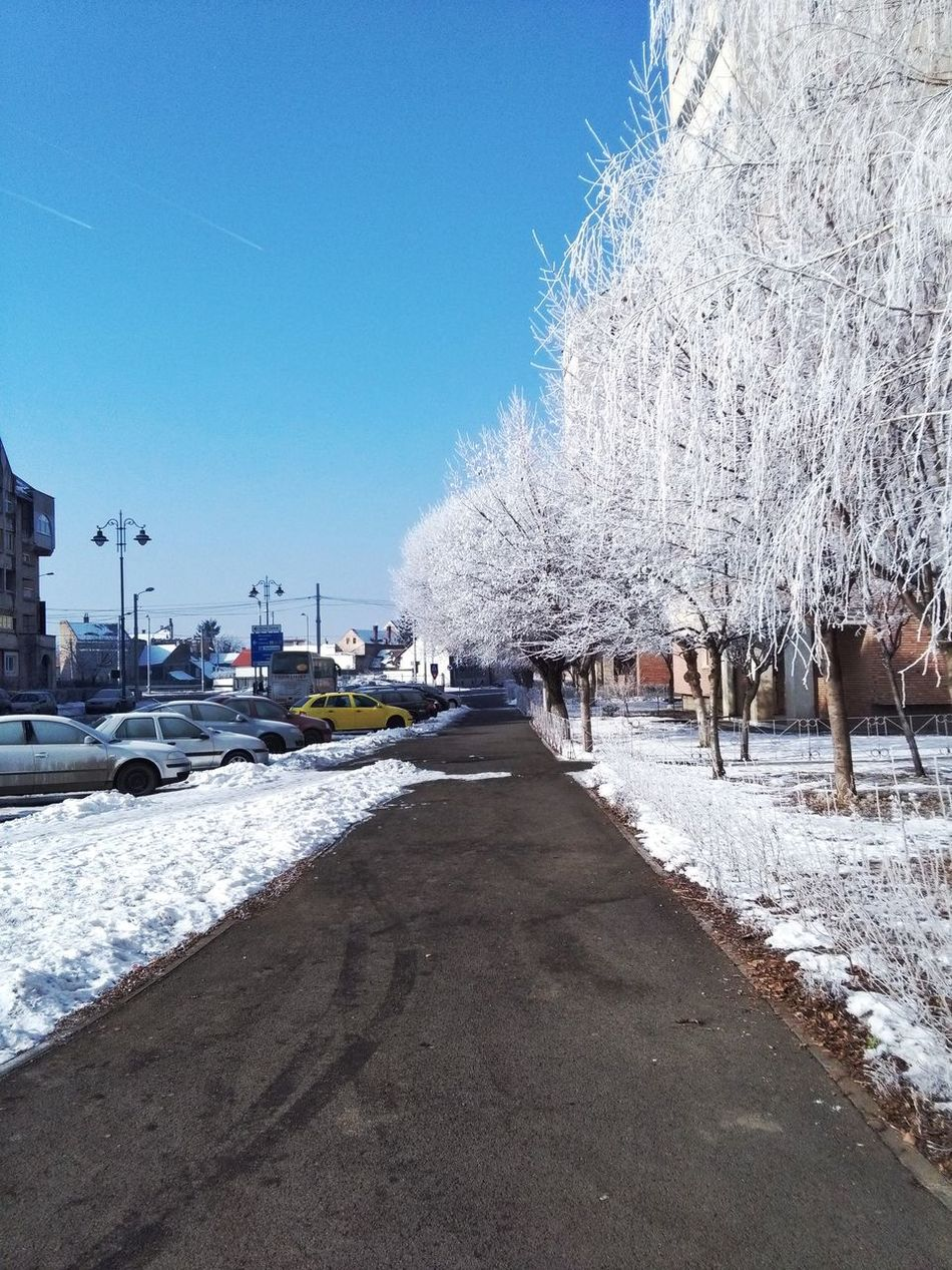 Sky Nature Outdoors Tree Sibiu, Romania Snow ❄ Morning Winter Cold Temperature FREZZING Frozen PhonePhotography Huawey Gallery The City Light EyeEmNewHere