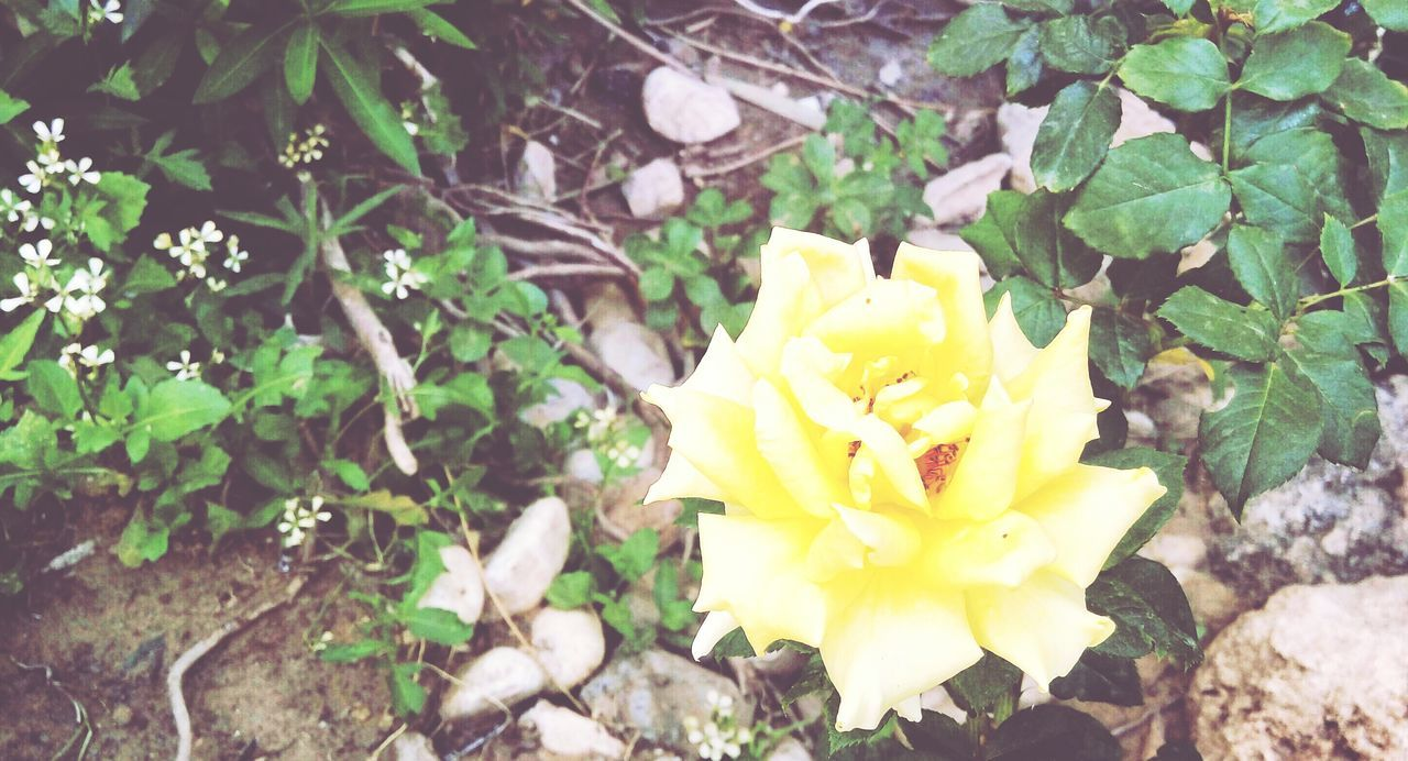 Flowers Flower Soft So Sweet ♥ So Soft Yellow Moment Photography Photographer Photo Picture Photograph . Photoshoot My Own Photo My Own Photography