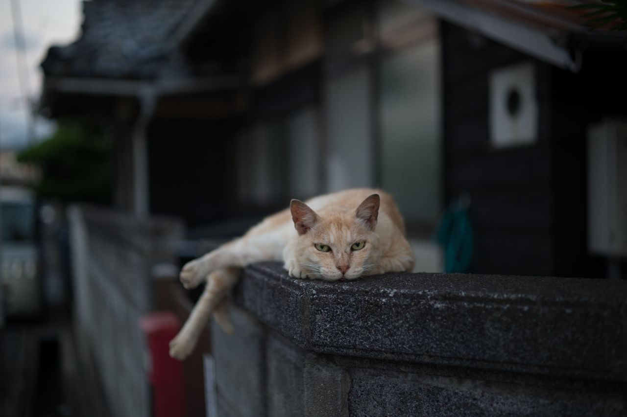 Beautiful stock photos of animals, Animal Themes, Cat, Day, Domestic Animals