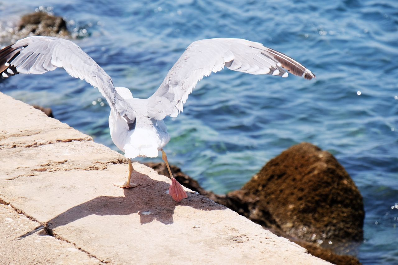 Bird Animals In The Wild Animal Themes Animal Wildlife Port Rock - Object Sea Nature Spread Wings Water Day Outdoors No People Beauty In Nature Seagull Seagulls Birds In Flight Wings Birds Animals Beach Relaxation in Ilha Do Farol , Algarve Portugal