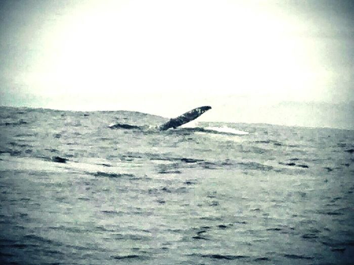 Whale Watching Northcoast FortBraggCA Naturelovers Pacificocean Ocean Photography Coast Northern California Black And White Photography