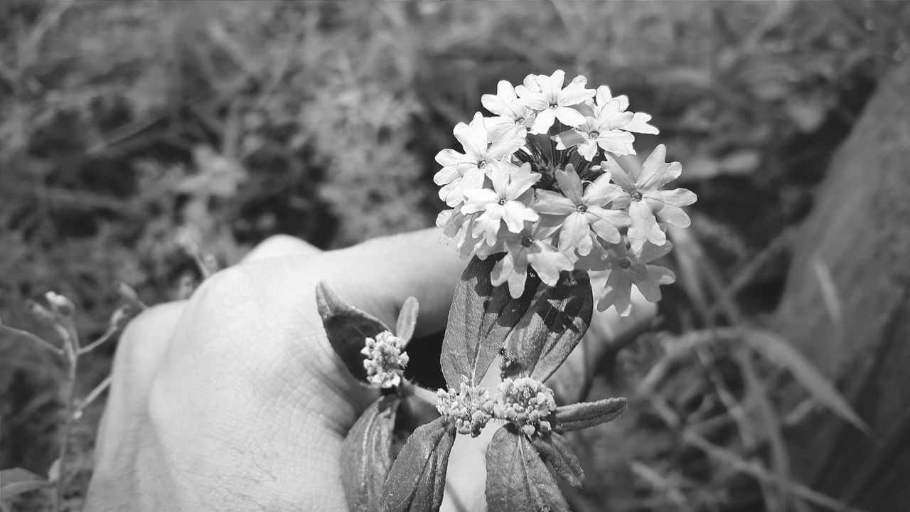 Flower GalaxyS5 EyeEm Followme Photography Picoftheday Instagram Likemypic Followforfollow Blackandwhite