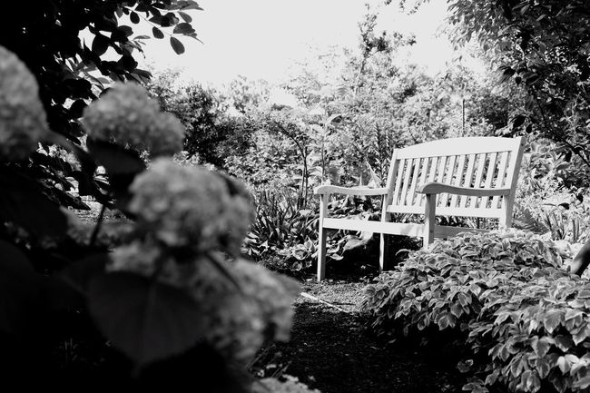 Tree Outdoors No People Day Nature Sky Close-up Japan Tokyo Chair Low Angle View Flower Blackandwhite Black And White Wood - Material
