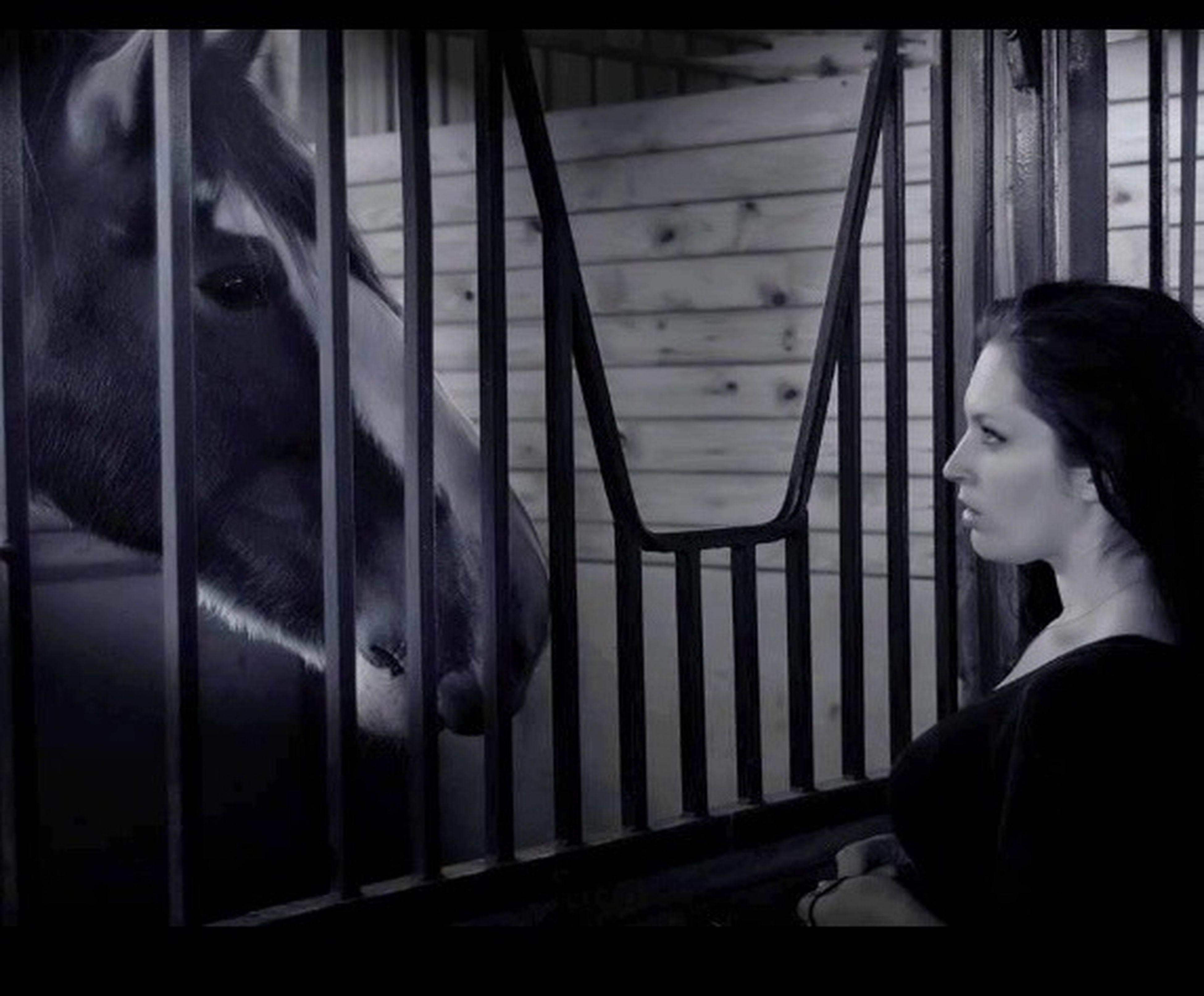 Mutual Admiration Horse Life Pony Power Love