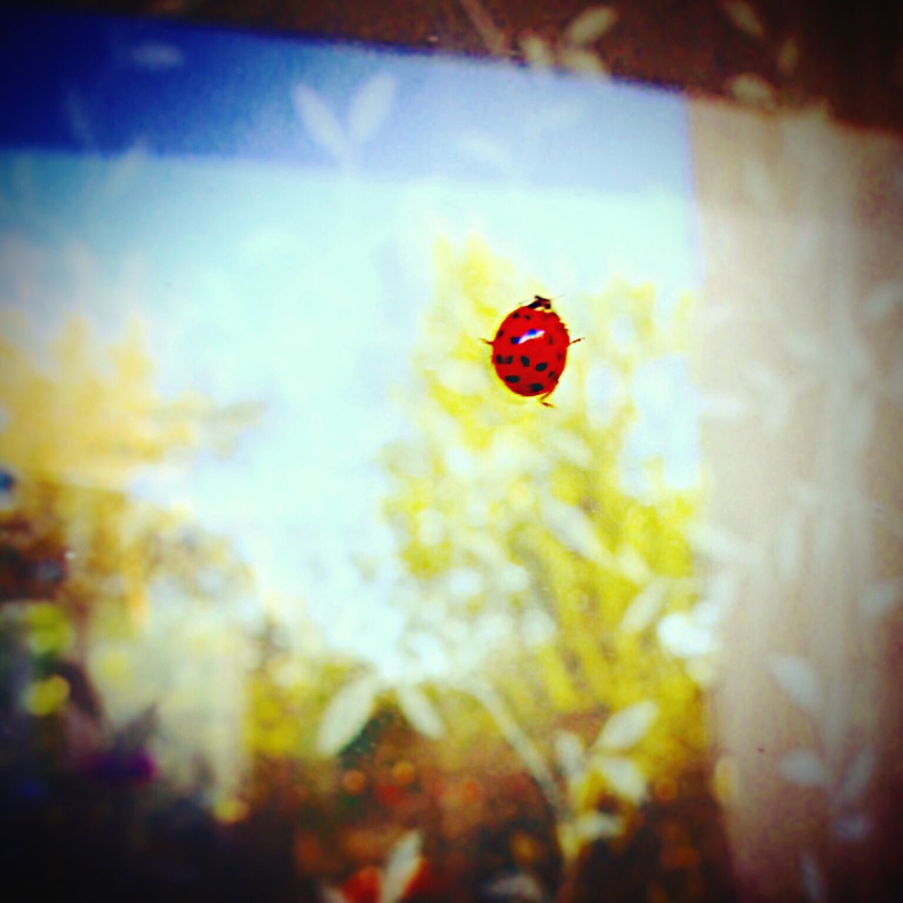 Ladybug Red Day Nature Outdoors Vibrant Color Small Zoology Beauty In Nature Red Color Tranquility No People Tiny Ladybird Outdoor Photography Ladybeetle Ladies  Bugs Beetle Colors And Patterns Nature Photography Focus On Foreground Balcony View Balcony Shot