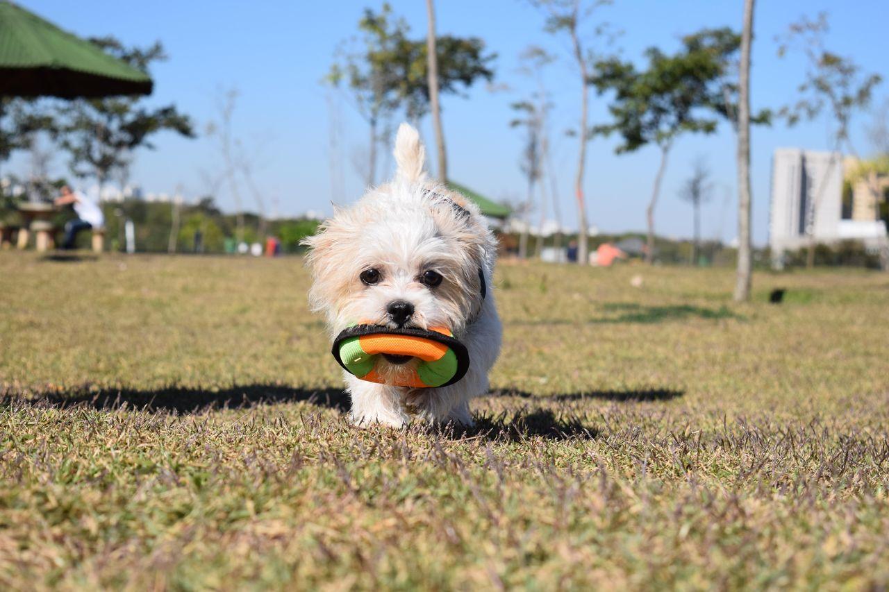 One Animal Grass Domestic Animals No People Day Nature Animal Themes Dog Babydog DogLove Pets