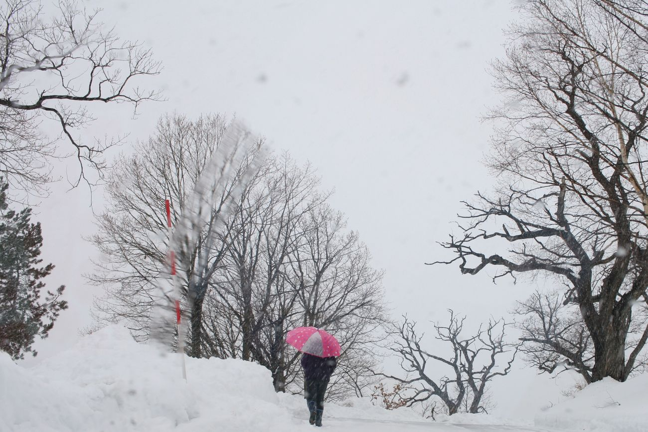 Unbrella Winter Snow Weather Cold Temperature Bare Tree Tree Real People One Person Outdoors Nature Rear View Snowing Day Beauty In Nature Sky Adult People Digitalx