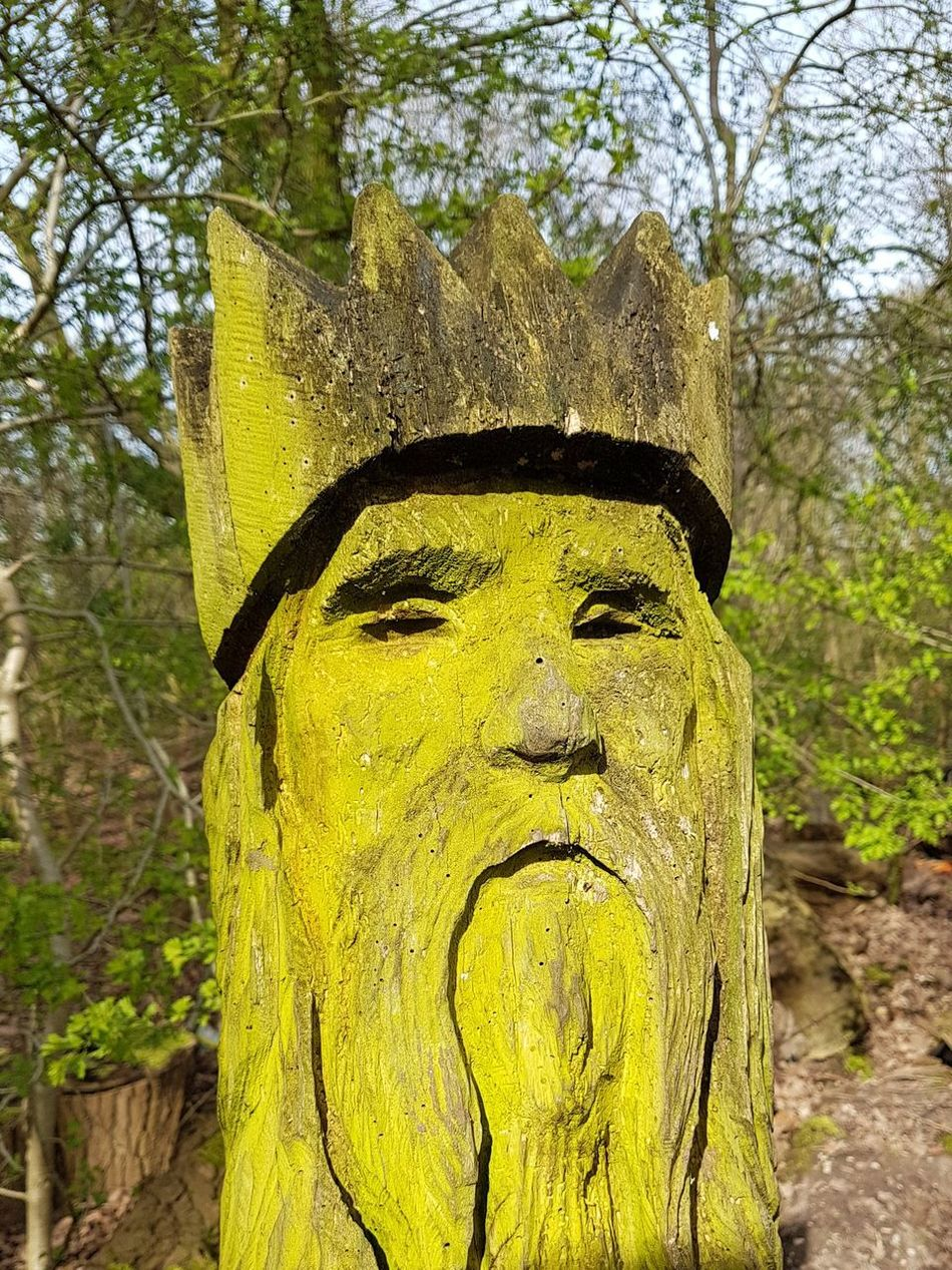 If You Go Down To The Woods Today.. Walking In The Woods Tree Art Tree Trunk Art Tree Growth No People Nature Outdoors Close-up Walk Sights Textured  Growth Wise Mans Face Tree Trunk