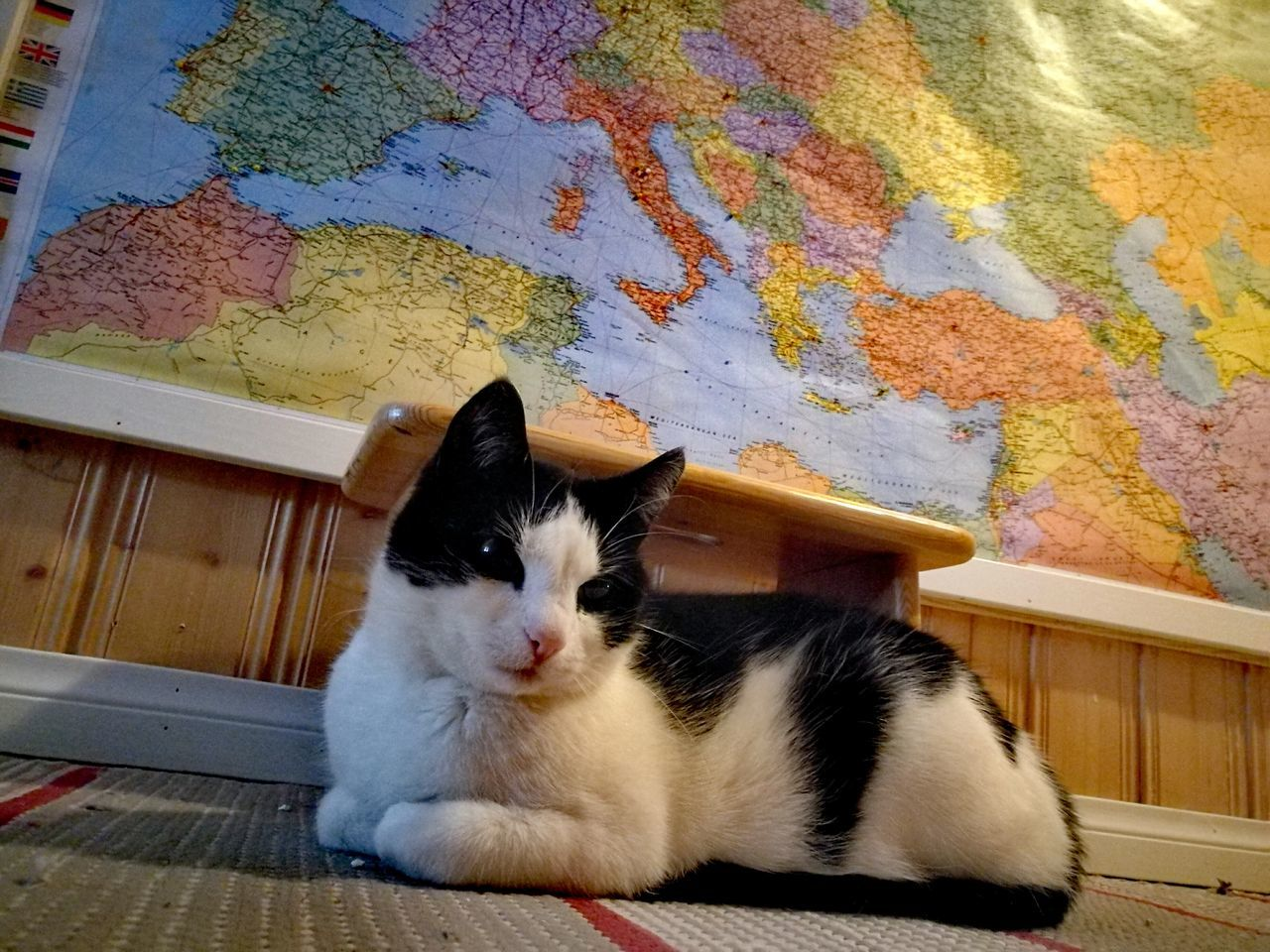 Dreaming about Italy? Pets Domestic Animals Domestic Cat Animal Themes One Animal Mammal No People Feline Cat Multi Colored Indoors  Day Close-up Map Mediterranean Sea