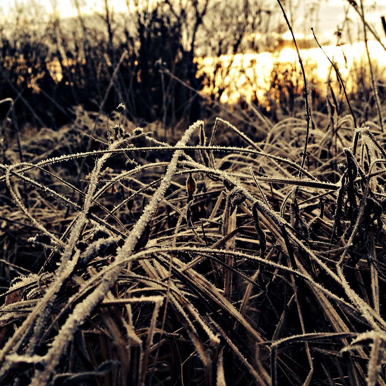 Hoarfrost Landscape Wisconsin