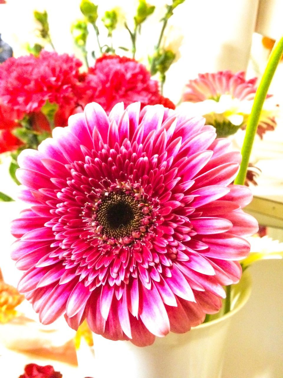 Close-Up Of Gerbera Daisy In Vase At Home