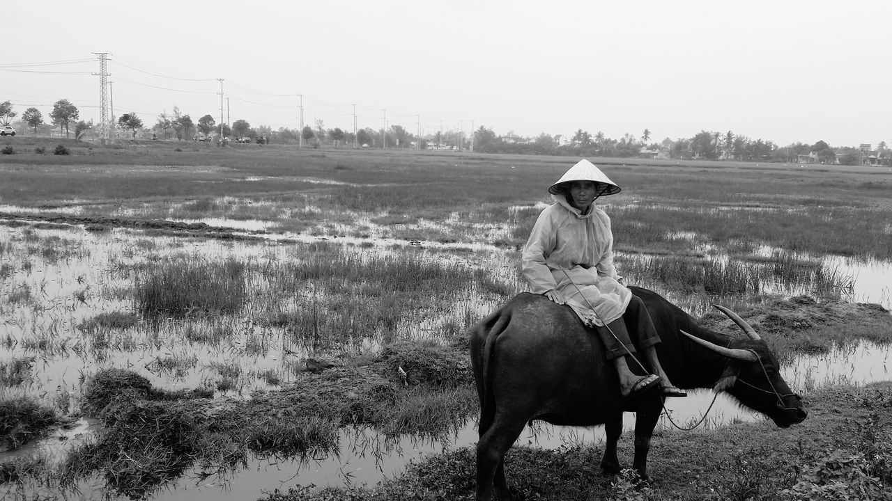 Beautiful stock photos of vietnam, one person, animal themes, one animal, agriculture