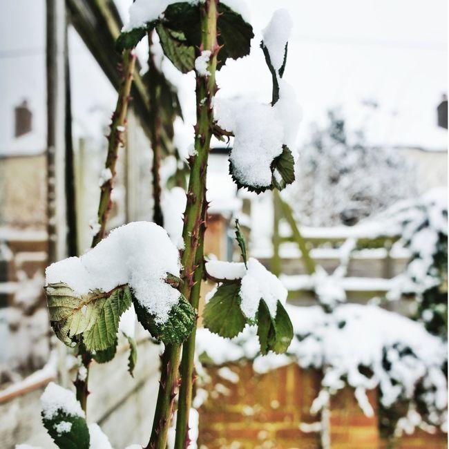 Snow..I really miss u..