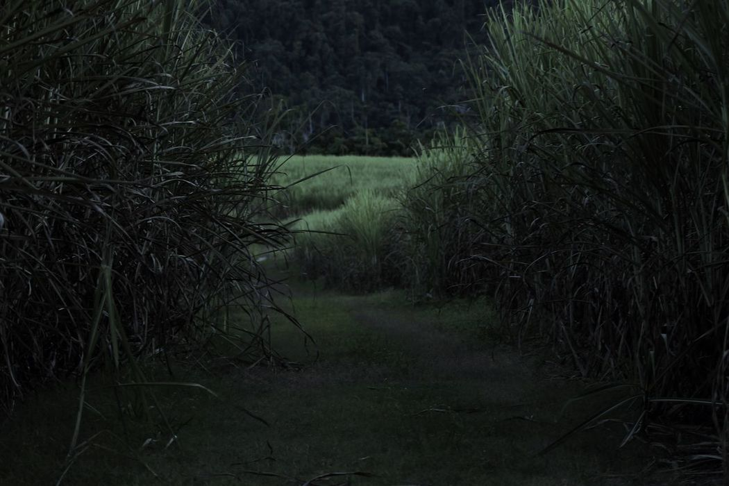 Dark Path Scary Road Eery Countryside The Dark Landscape The Dark Forest Follow4follow