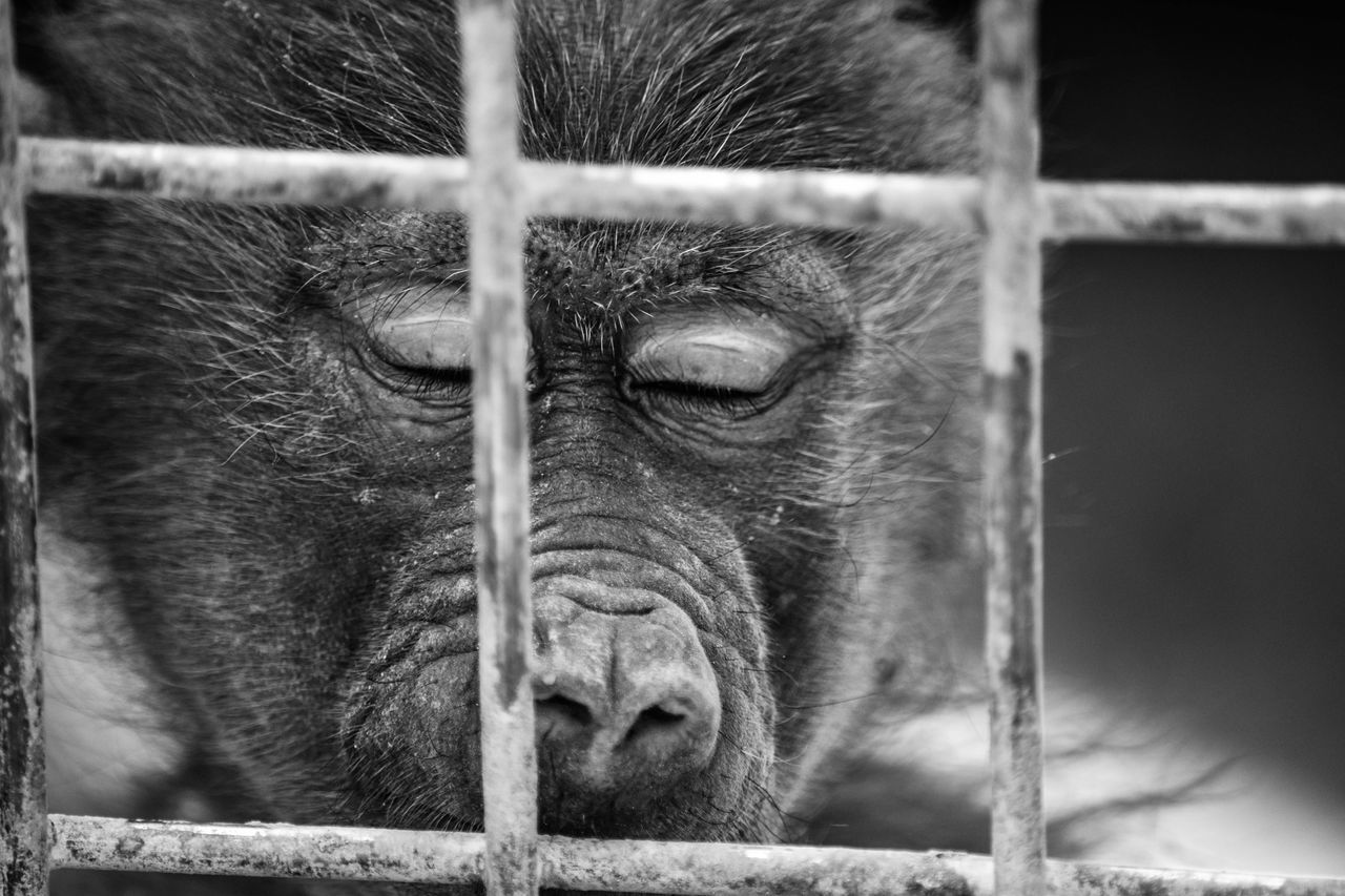 Monkey Monkey Face Hanging Out Check This Out Taking Photos Relaxing Cheese! Photographs Beautiful View Blackandwhite Photography Check This Out السودان تصويري_نيكون الرياض تصويري  Taking Photos Photography Learn & Shoot: Leading Lines Animals Eyes