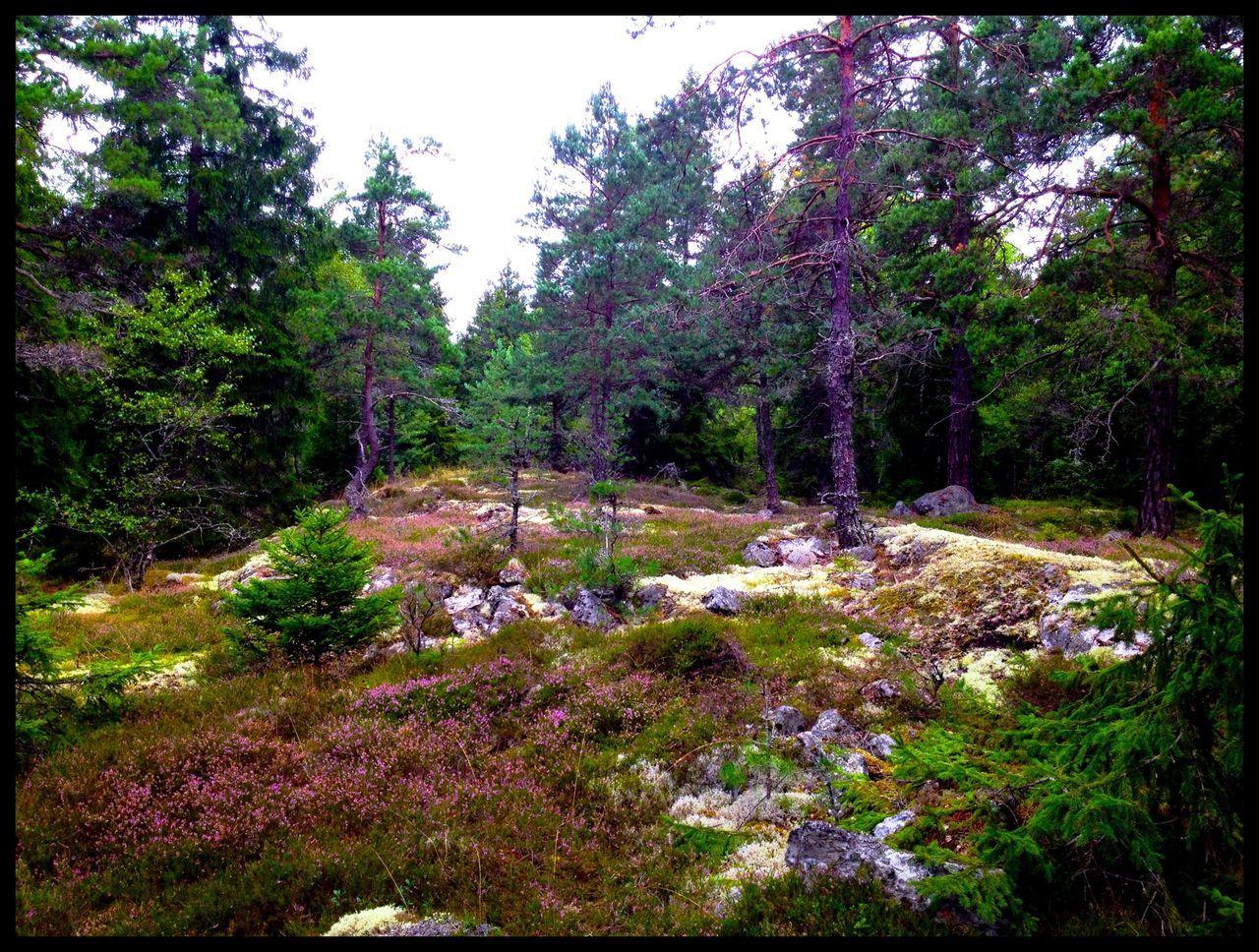 Nature Summer ☀ Sweden Scenery