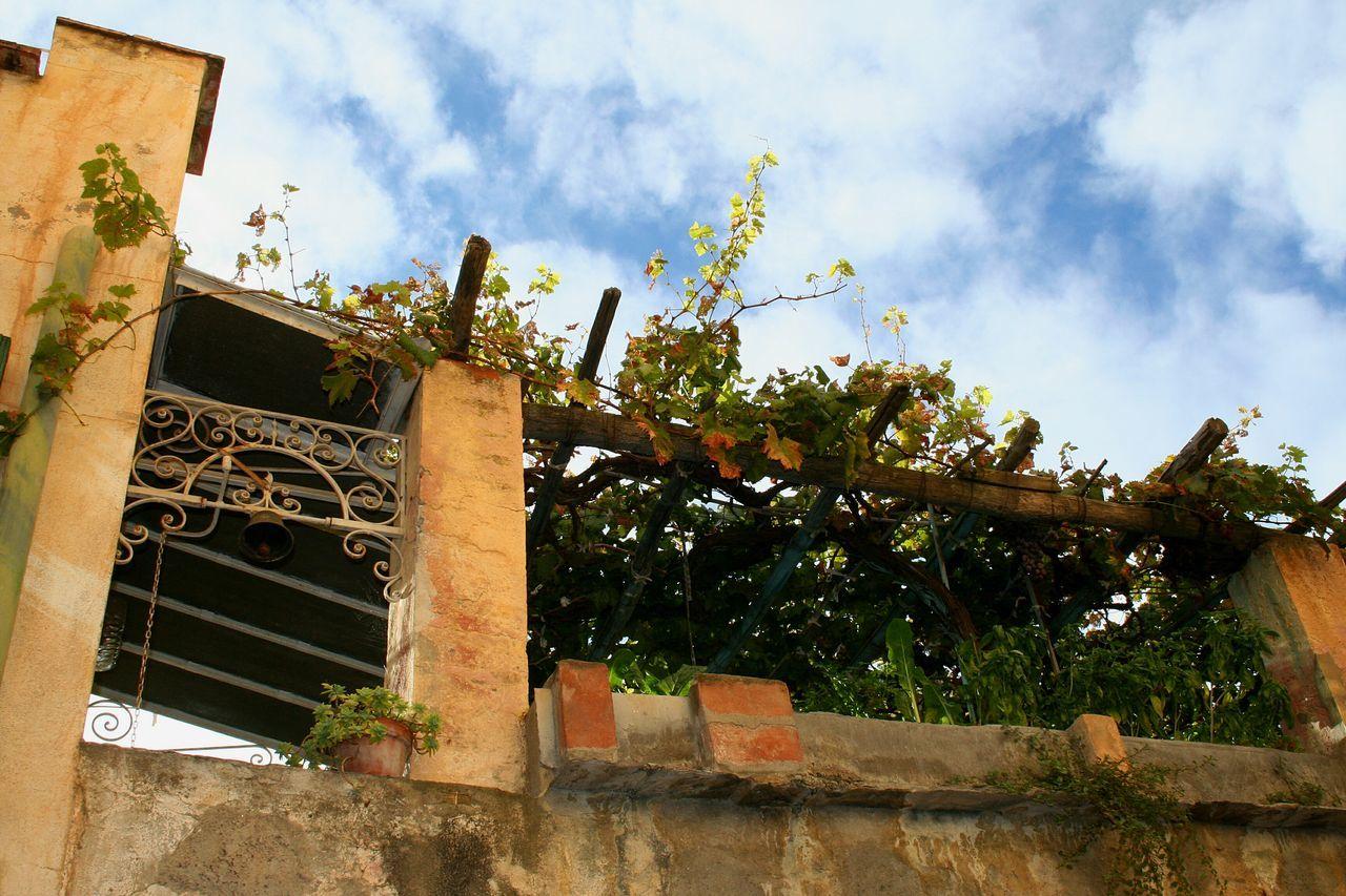 Sky Built Structure Tree Cloud - Sky No People Low Angle View Growth Outdoors Architecture Day Nature Mediterranean Summer Summer Vibes Mediterranean Nature Mediterranean Garden Pergola Terrazzo Italian House Summer House Liguria,Italy Travel Destinations Italian Village  Building Exterior Sunlight Branch