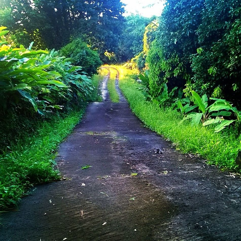 Backroads Naturewalks Nature Natgeo Grenada Ourbestshots Wu_caribbean Westindies_people Instagram_473 Islandlivity Instagram Landscape_captures