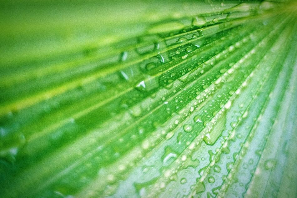 Water Drop Wet Full Frame Backgrounds Green Color Season  Close-up Selective Focus Growth Leaf Nature Beauty In Nature Droplet Green Soft Focus EyeEm Nature Lover Water Drop Filmisnotdead 35mm Film Photography