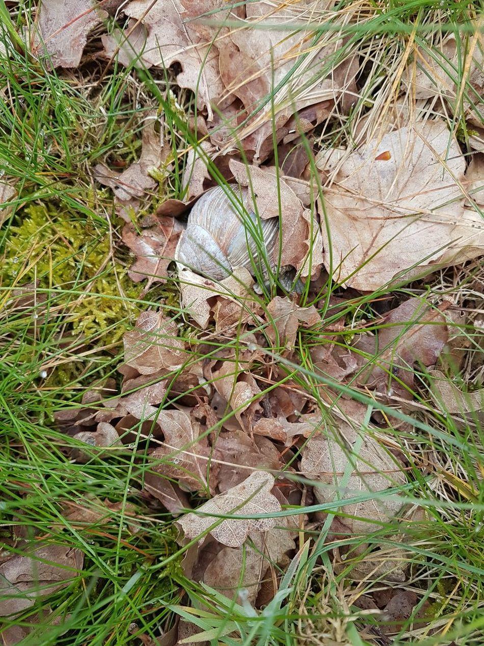 Spring springtime Muschel Spring 2016 Close-up Muschelschalen