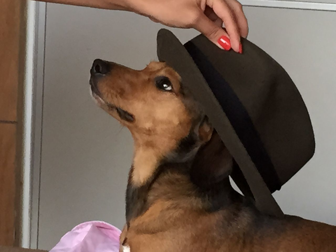 Cropped Image Of Woman Putting Hat On Dog
