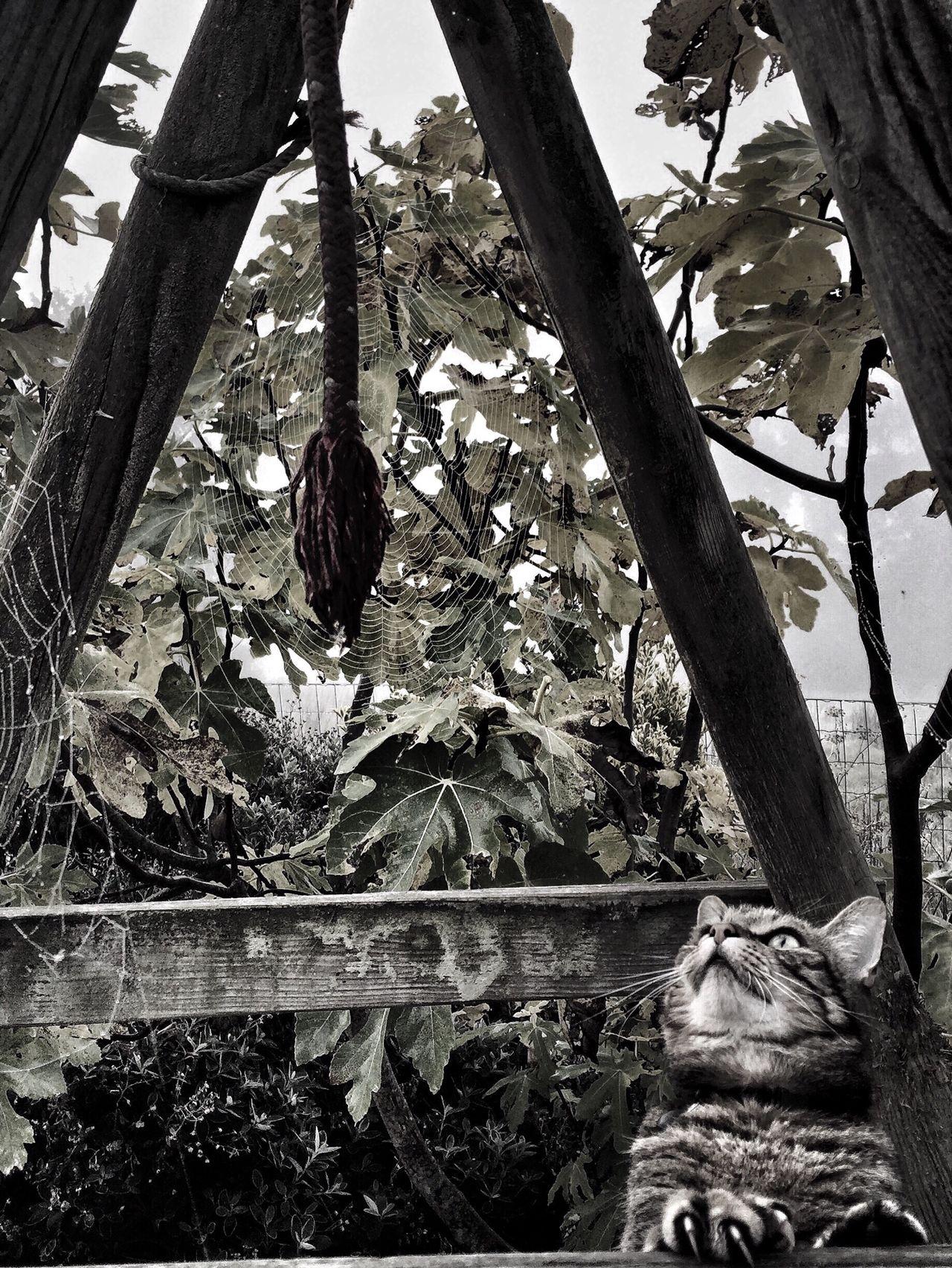 Cats Blackandwhite Animals