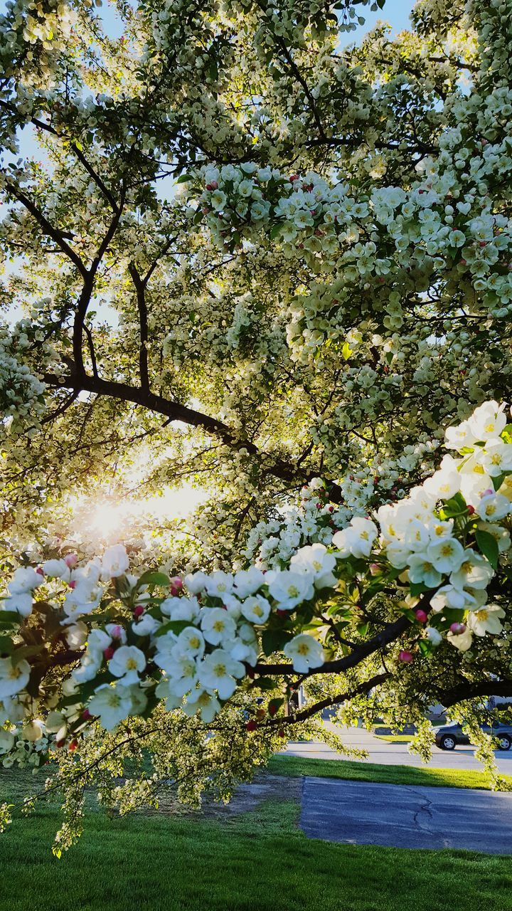 tree, growth, blossom, flower, nature, fragility, springtime, no people, beauty in nature, branch, day, outdoors, freshness