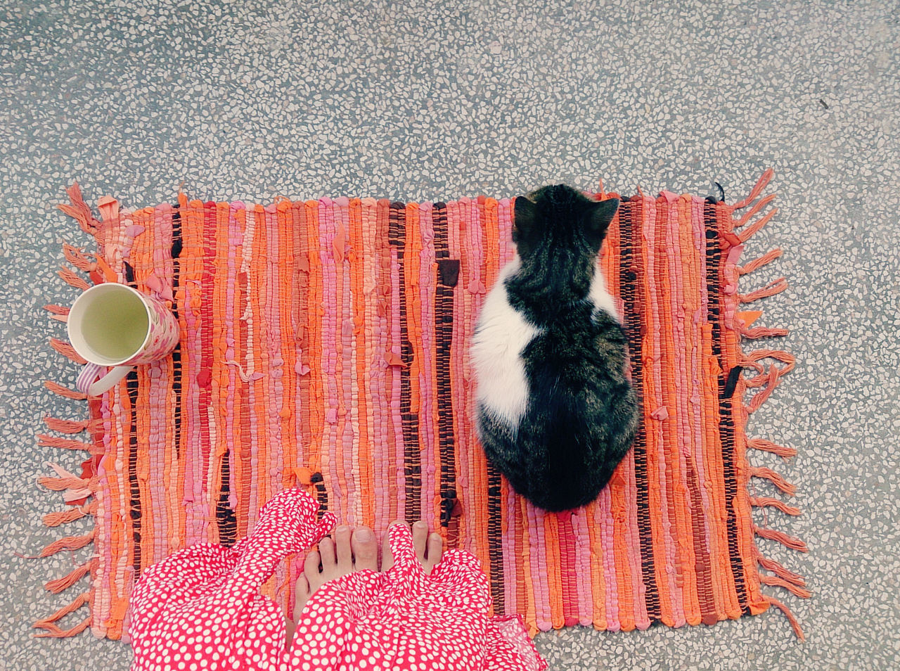 View from above of a woman drinking tea with her cat Beverage Cat Comfort Company Cozy Directly Above Domestic Domestic Animals Enjoying Life Floor Happy Moments High Angle View Home Indoors  Kitty Lifestyle Morning Pet Quiet Relaxing Rug Simple Slow Life Slow Living Weekend