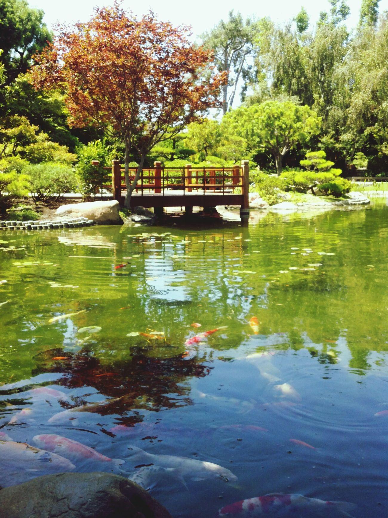 Japanese Gardens, CSU Long Beach