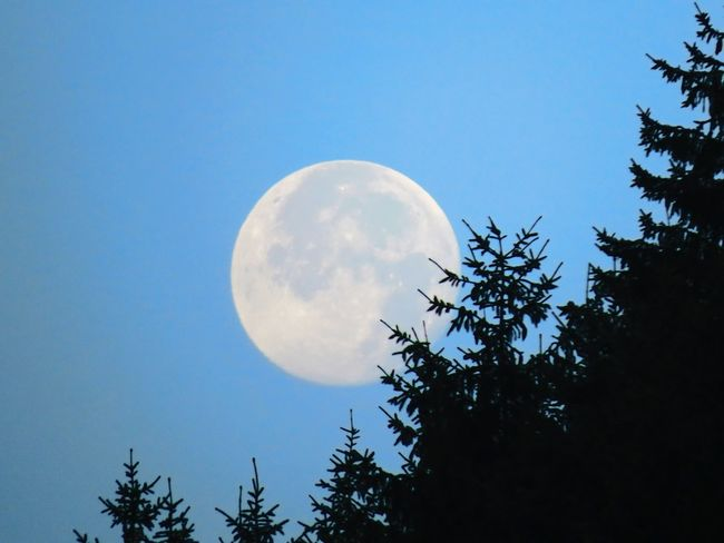 Full Moon Moon Over The Forest Sky Planet Moon Moon Shots Moon Surface Moon Porn Astrology