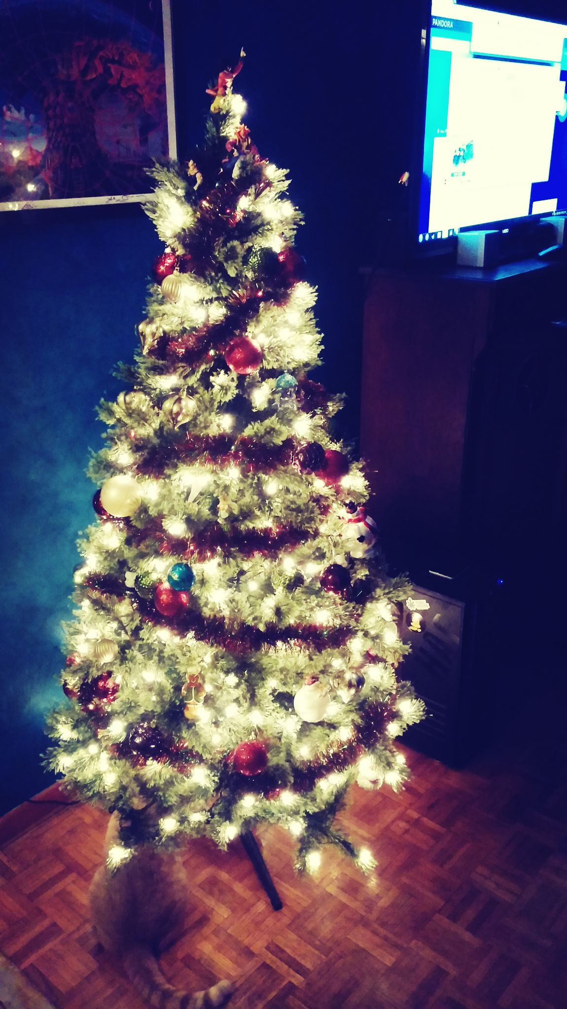 Finally got it up! Cat Pretty Lights Be Merry Oh Christmas Tree Oh Christmas Tree