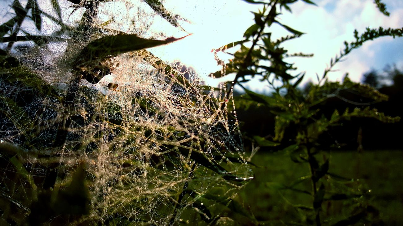 Beauty In Nature Branch Close-up Day Growth Nature No People Outdoors Spider Web Tree