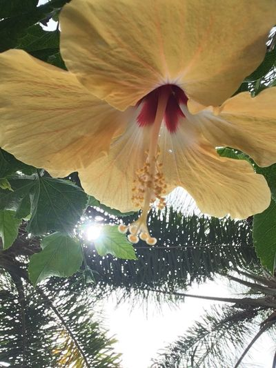 Flower Growth Beauty In Nature Nature Fragility Petal Freshness Low Angle View No People Tree Plant Flower Head Outdoors Day Close-up Blooming Paint The Town Yellow