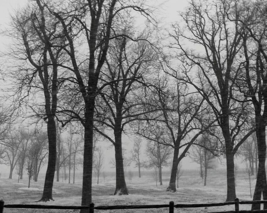 My Favorite Photo Blackandwhite Photography Austere Pure I love the composition, the way your eyes follow the trees trying to find a way out. I love the austere stark beauty. I can feel the cold. I revel in the cold, stark, beauty of the day. Snow ❄ Trees