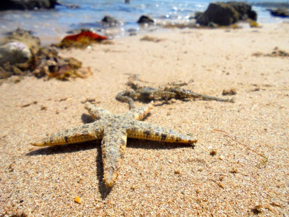 Beautiful stock photos of stars, , Beach, Beauty In Nature, Close-Up