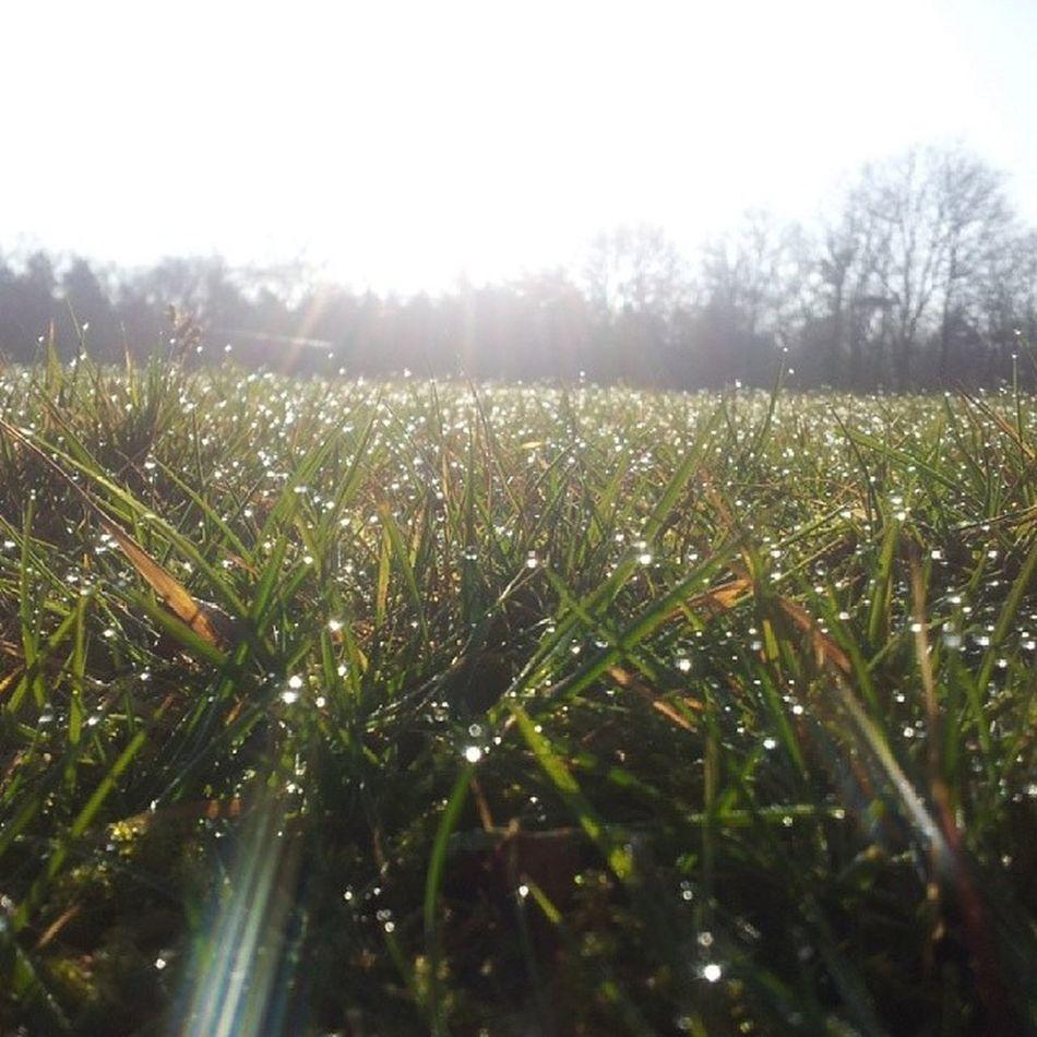 Geijsteren Grass